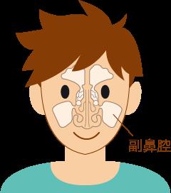 副鼻腔イラスト